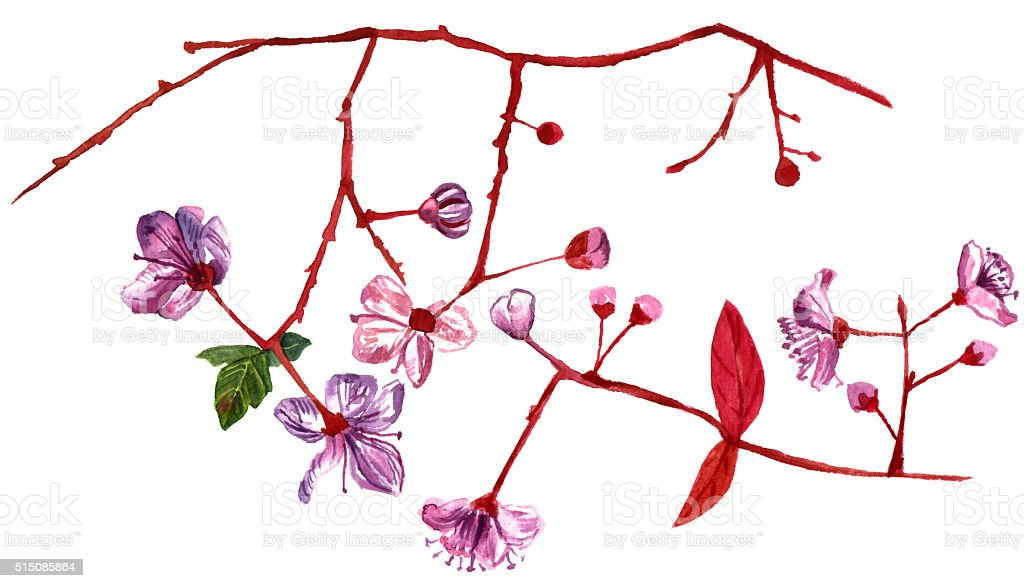 Watercolor drawing of branches with almond flowers in bloom vector art illustration