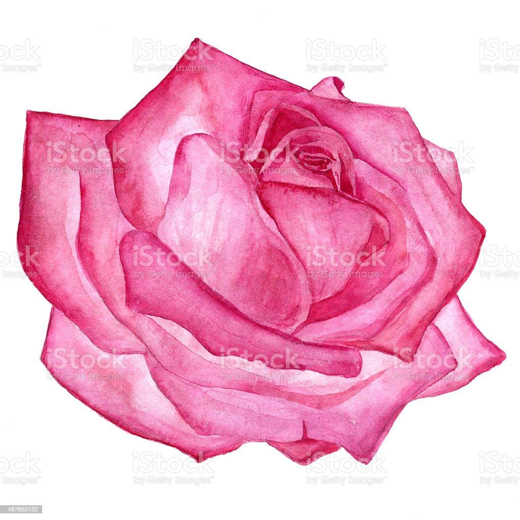 Fleur Rose Dessin on Crayon Border