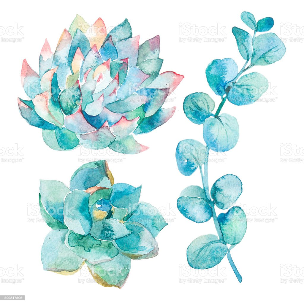 Watercolor eucalyptus leaves and succulents stock photo