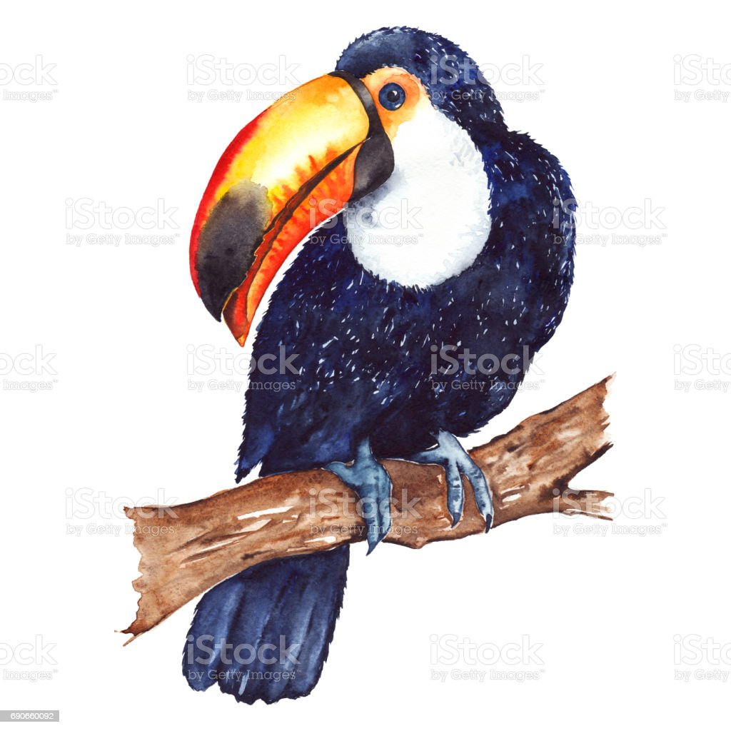 Watercolor exotic tropical animal bird toucan sitting on branch...