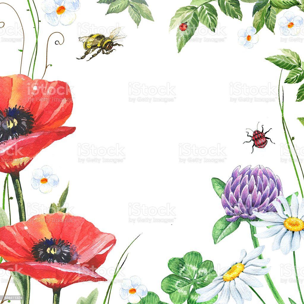 Watercolor floral frame with poppies, chamomiles and clover vector art illustration