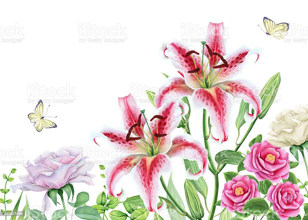 Watercolor floral image with lily, camellia and rose flowers vector art illustration