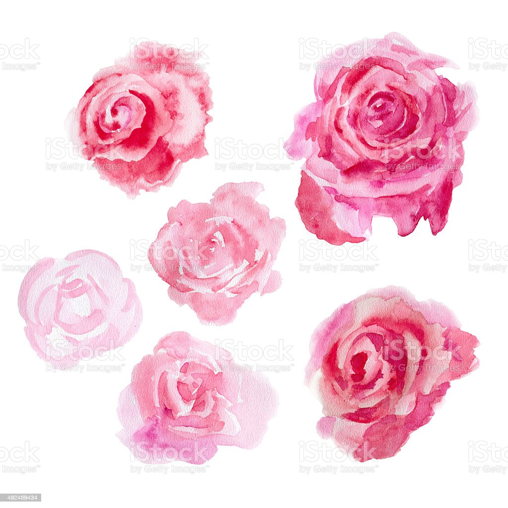 Watercolor flowers. Roses vector art illustration