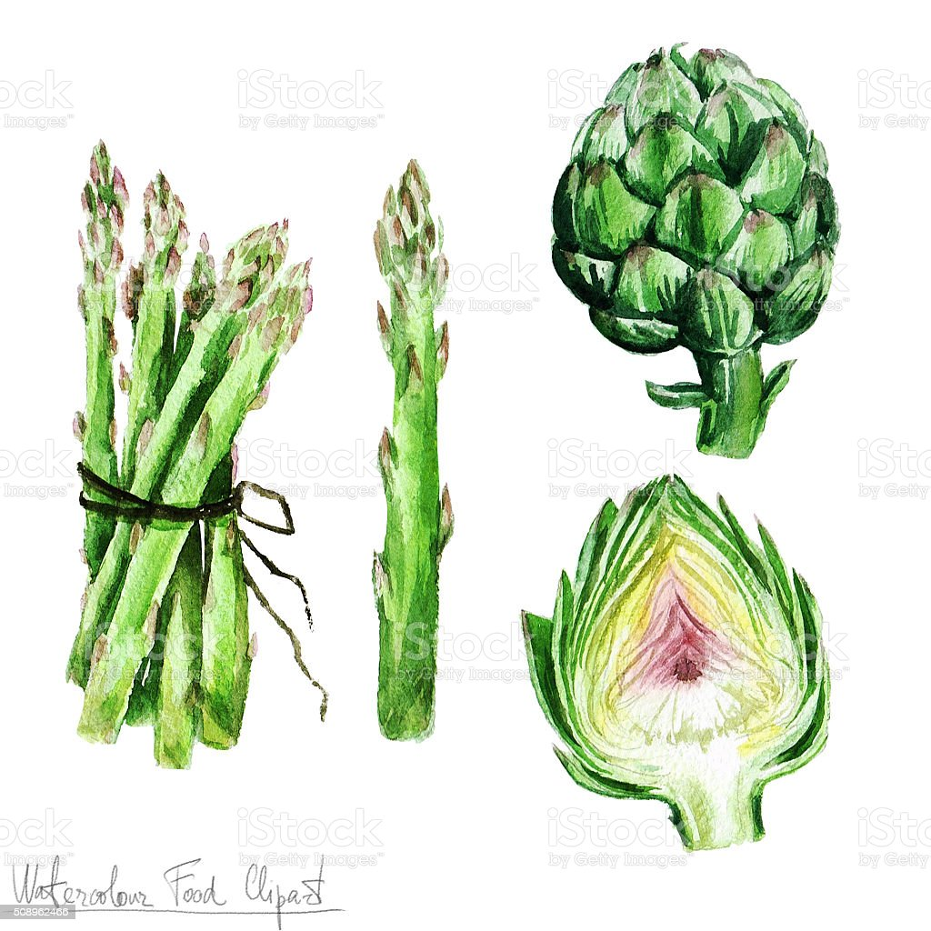Watercolor Food Clipart - Asparagus and Artichoke vector art illustration