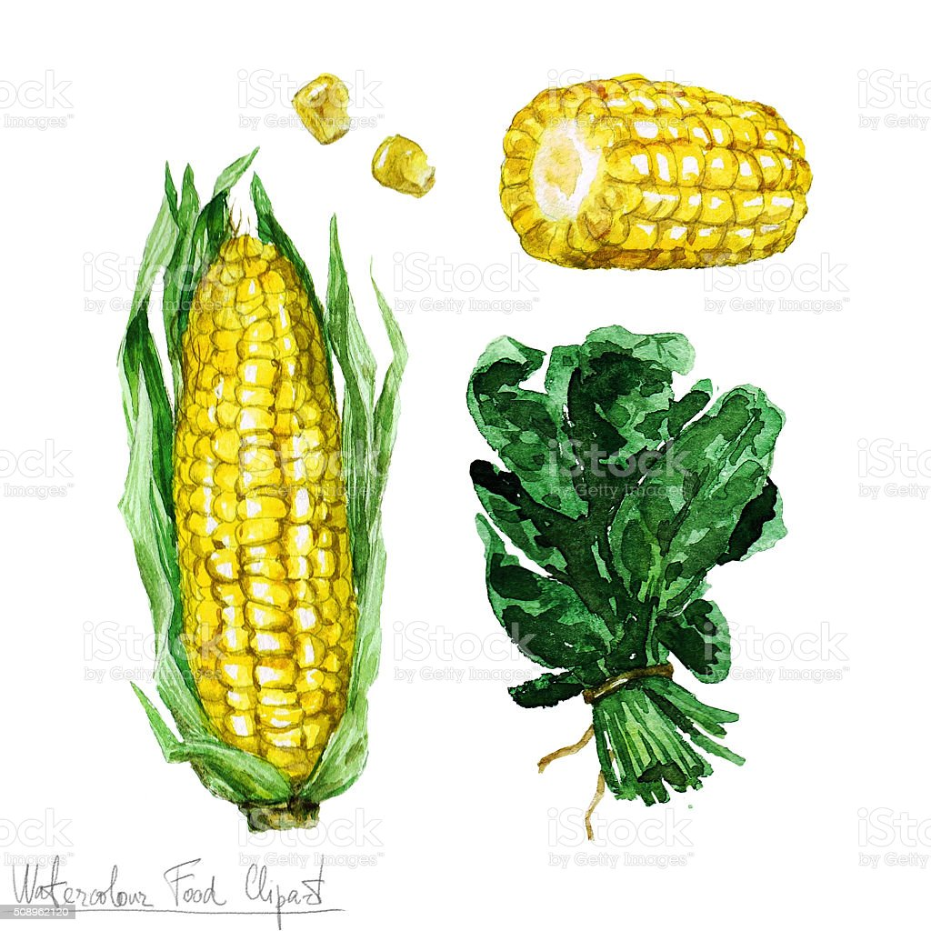 Watercolor Food Clipart - Corn and Spinach vector art illustration
