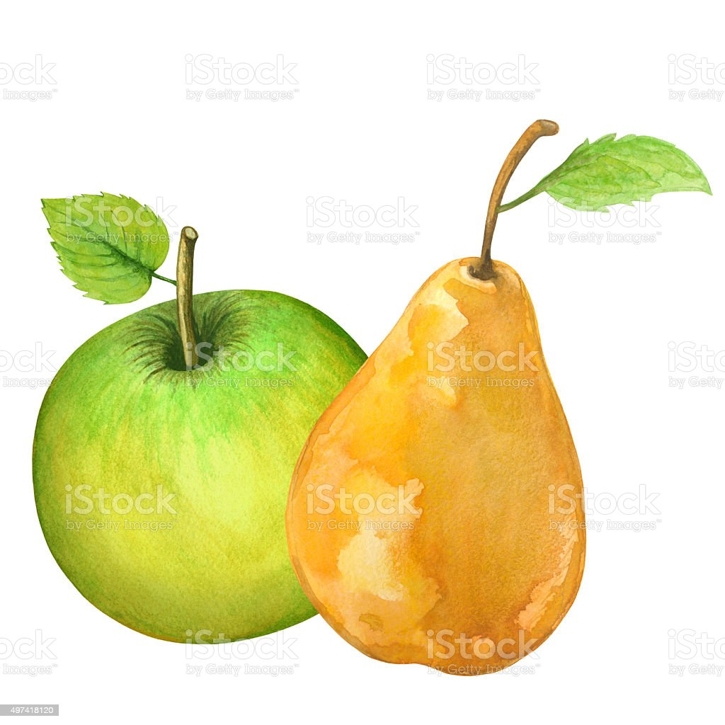 Watercolor fruits pear, green apple with leafs vector art illustration