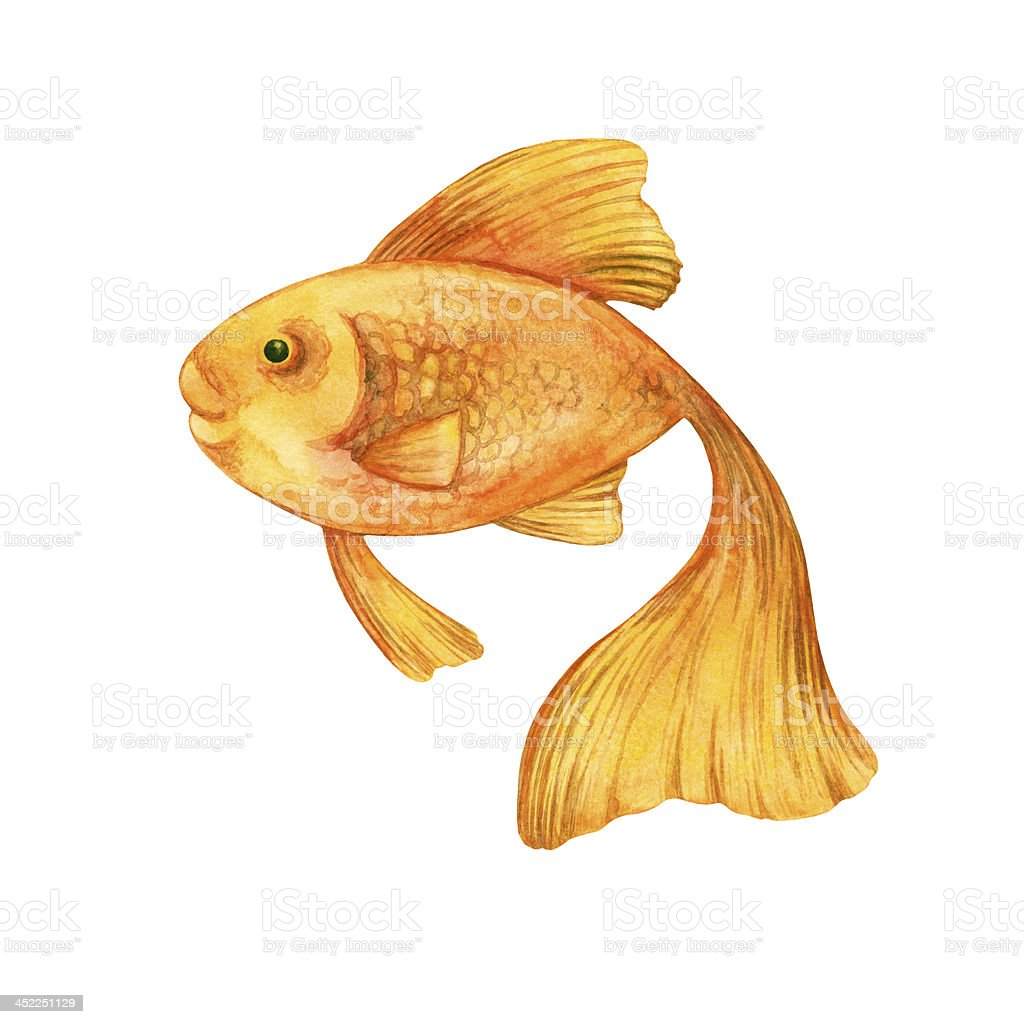 Watercolor goldfish vector art illustration