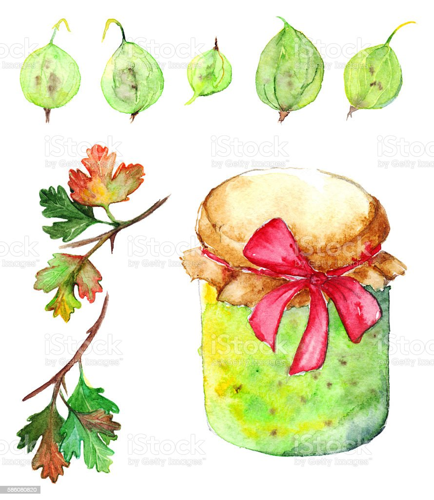 Watercolor gooseberry berry jam jar bow set isolated vector art illustration