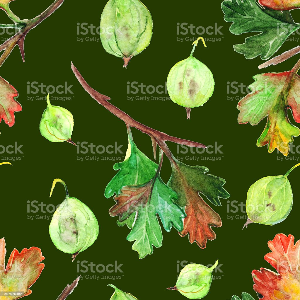 Watercolor gooseberry berry leaf branch seamless pattern texture background vector art illustration