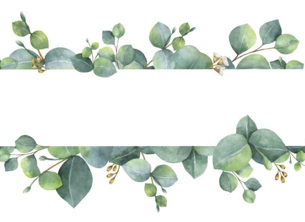 Eucalyptus Tree Clip Art Vector Images Amp Illustrations