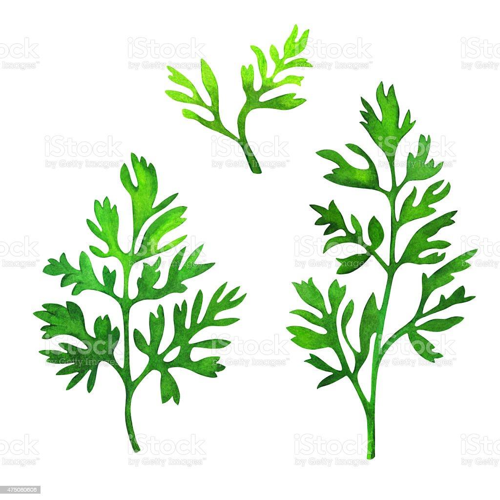 Watercolor green leaves vector art illustration