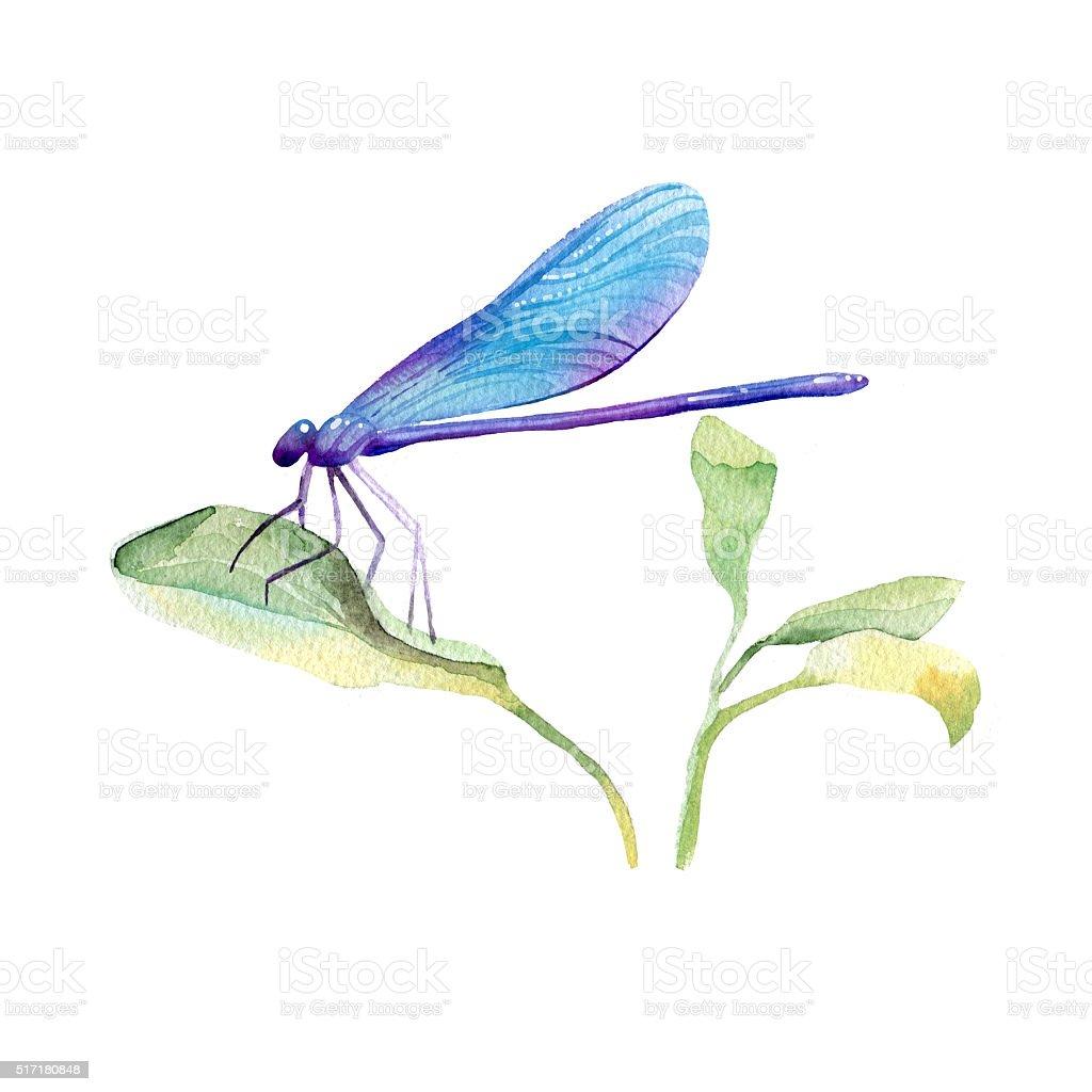 Watercolor hand drawn dragonfly. vector art illustration