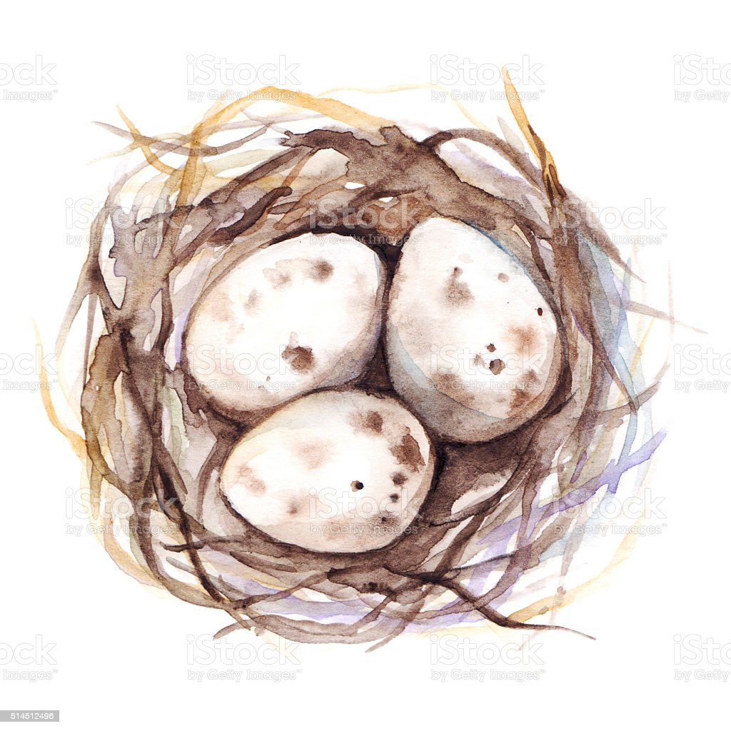 Watercolor hand drawn nest with quail eggs isolated vector art illustration
