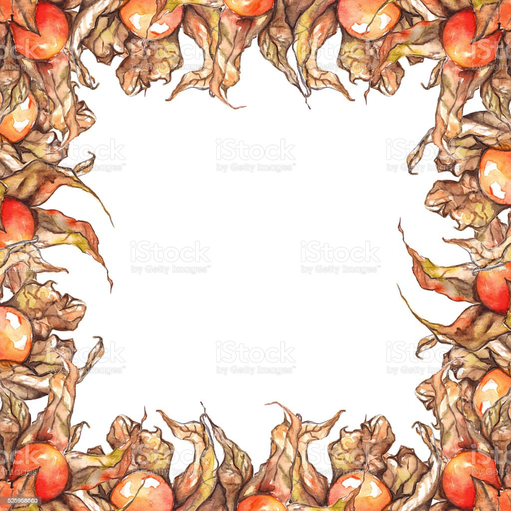 Watercolor hand drawn physalis fruit berry frame isolated stock photo