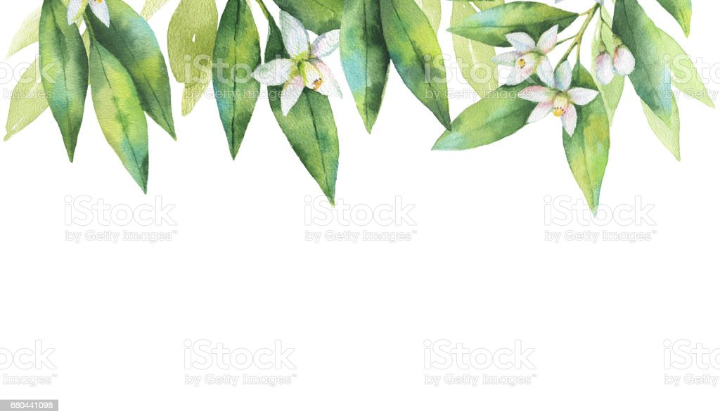 Watercolor hand painted card of the branches and flowers fruit orange isolated on white background. vector art illustration