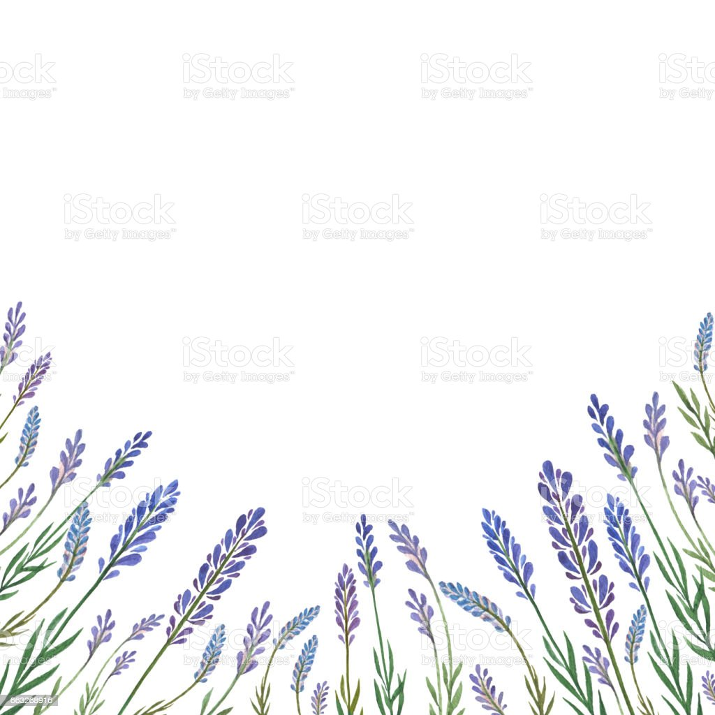 Watercolor hand painted flower card with lavender. vector art illustration