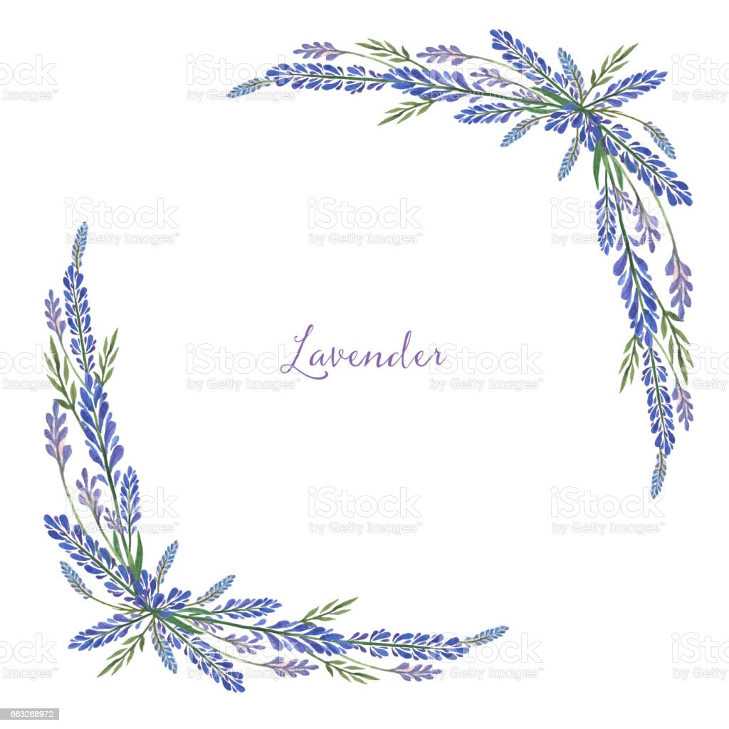 Watercolor hand painted flower square frame with lavender. vector art illustration