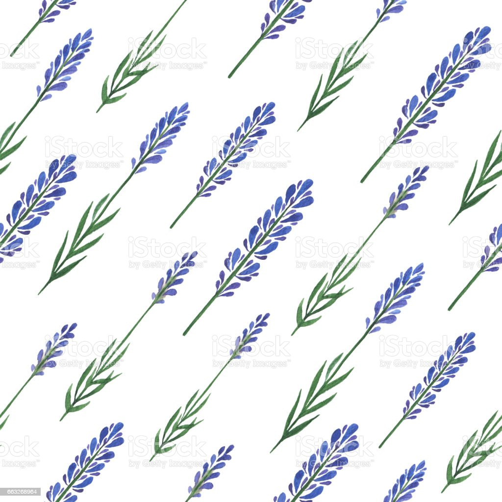 Watercolor hand painted seamless pattern with lavender isolated on white background. vector art illustration