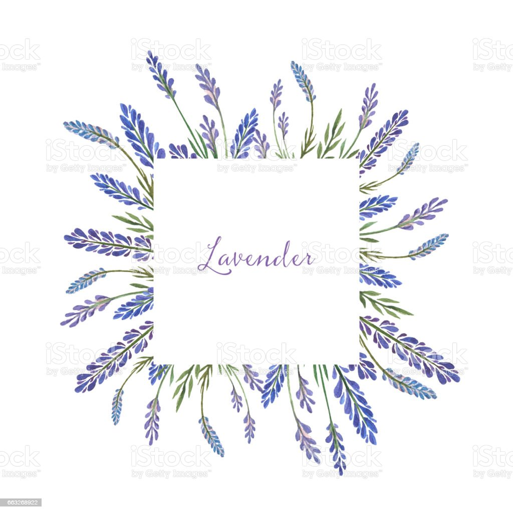 Watercolor hand painted square frame with lavender. vector art illustration