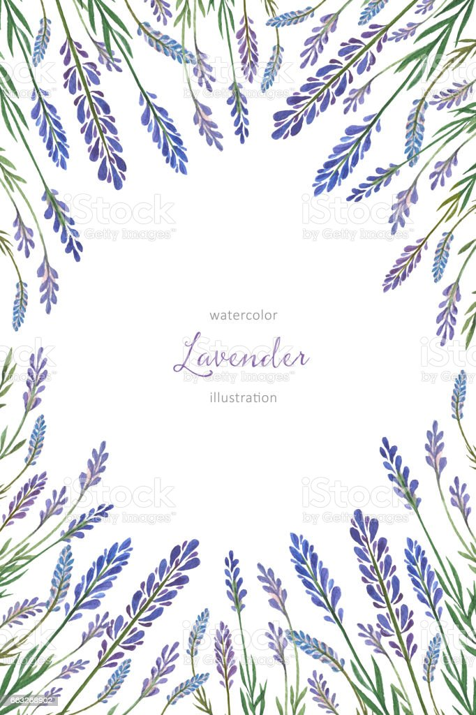 Watercolor hand painted vertical flower card with lavender. vector art illustration
