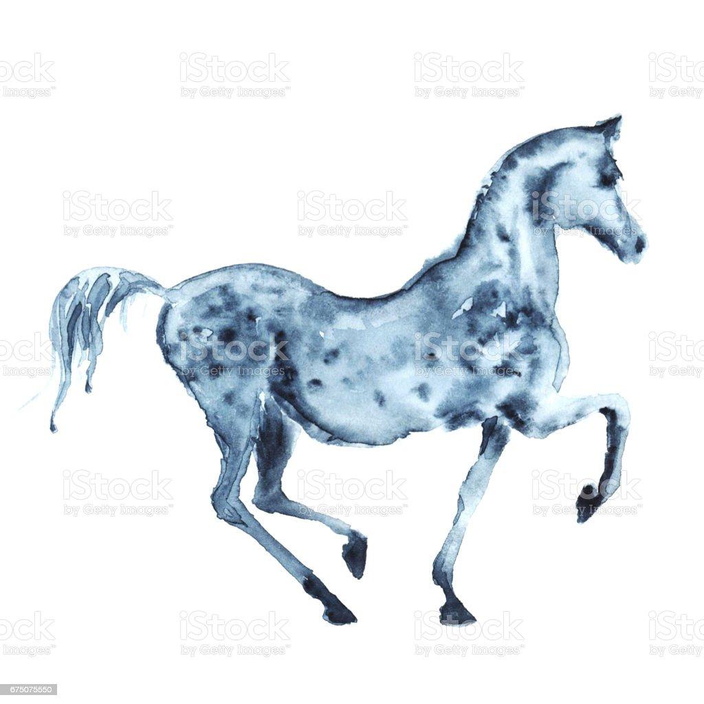 Watercolor hand painting arabian dapple grey horse on white. vector art illustration