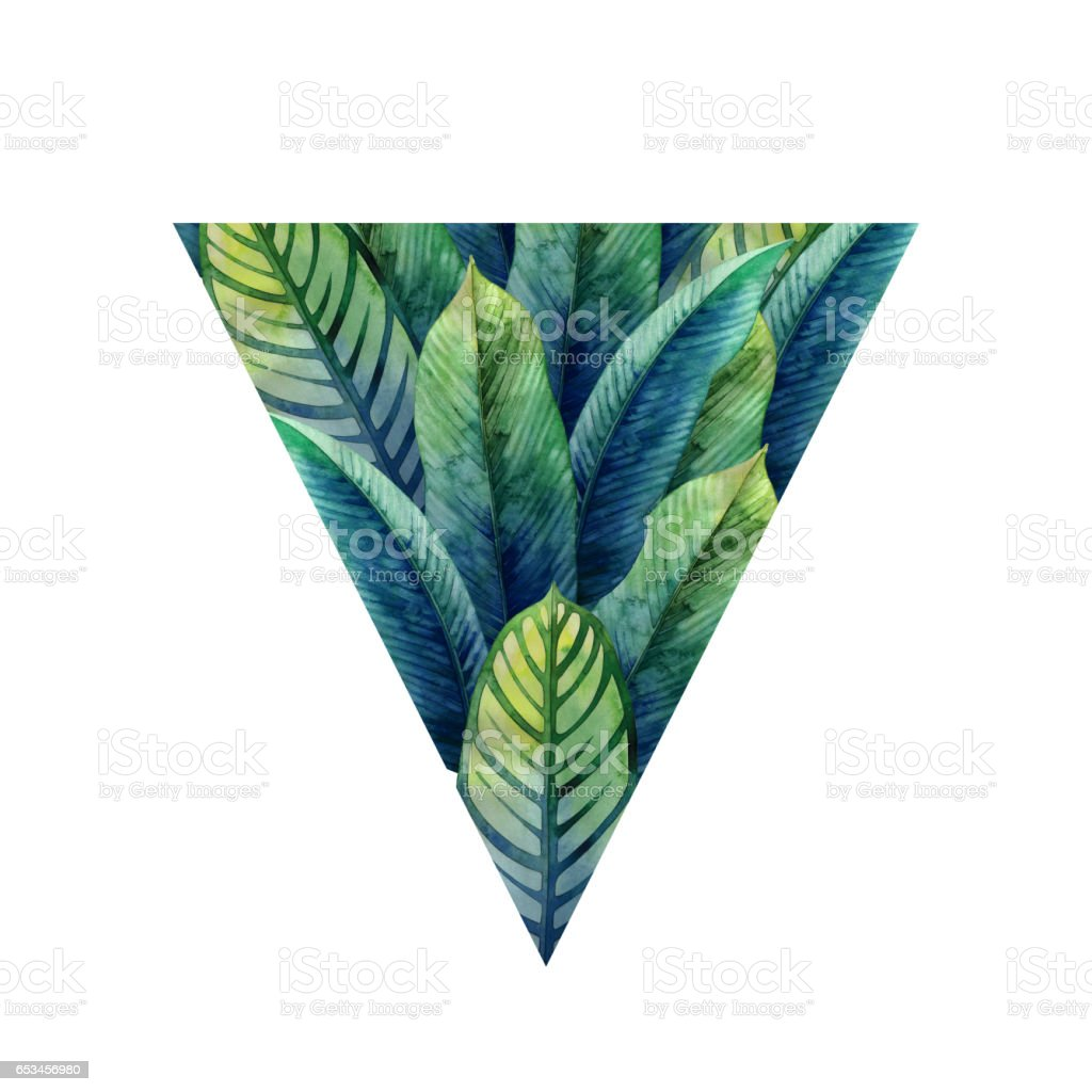 Watercolor heliconia leaves vector art illustration