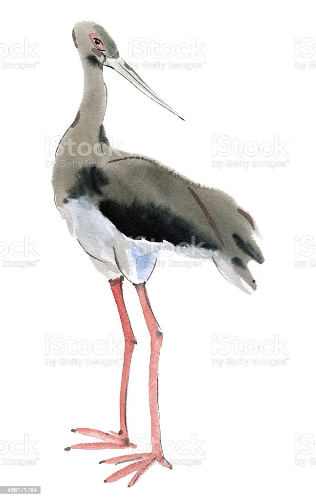 Watercolor illustration of a bird black stork vector art illustration