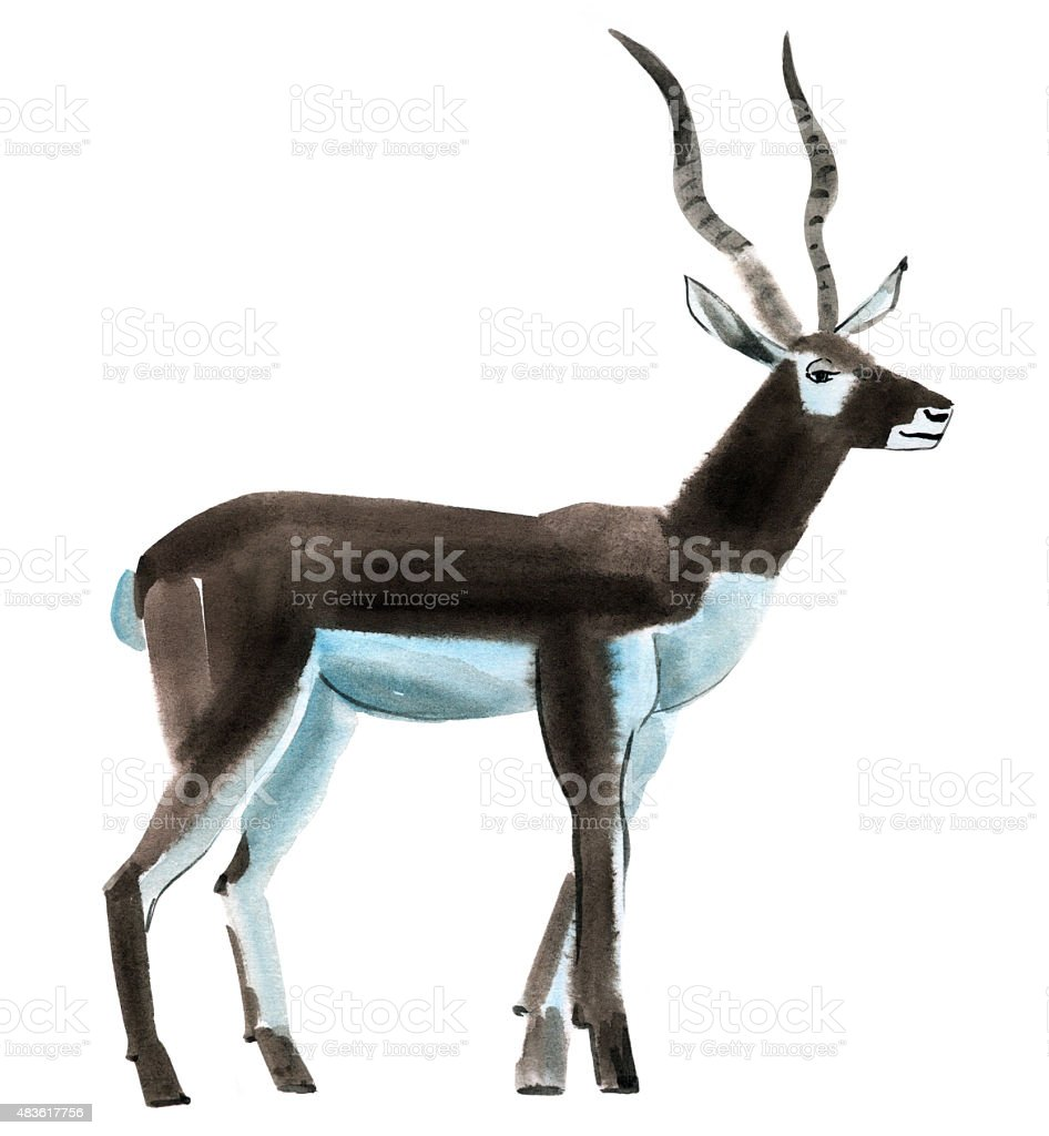 Watercolor illustration of antelope in white background vector art illustration