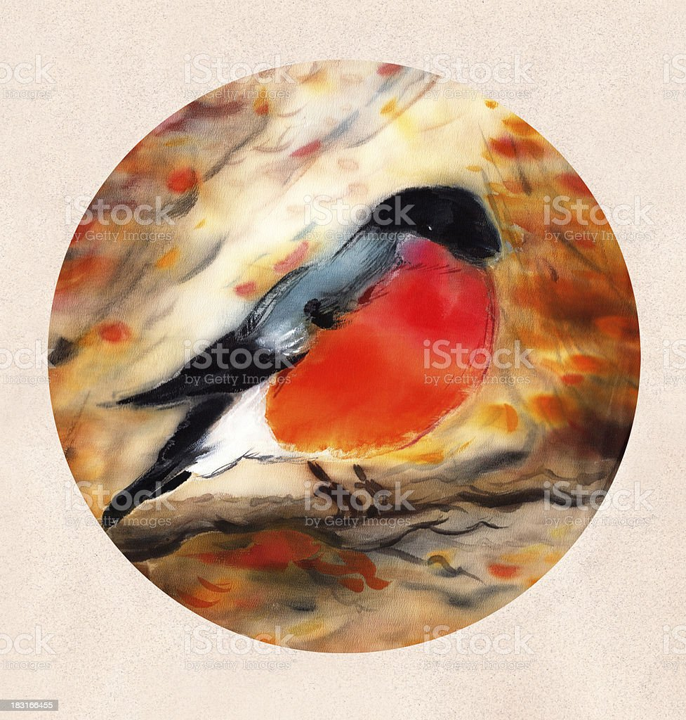 Watercolor illustration of Bullfinch royalty-free stock vector art
