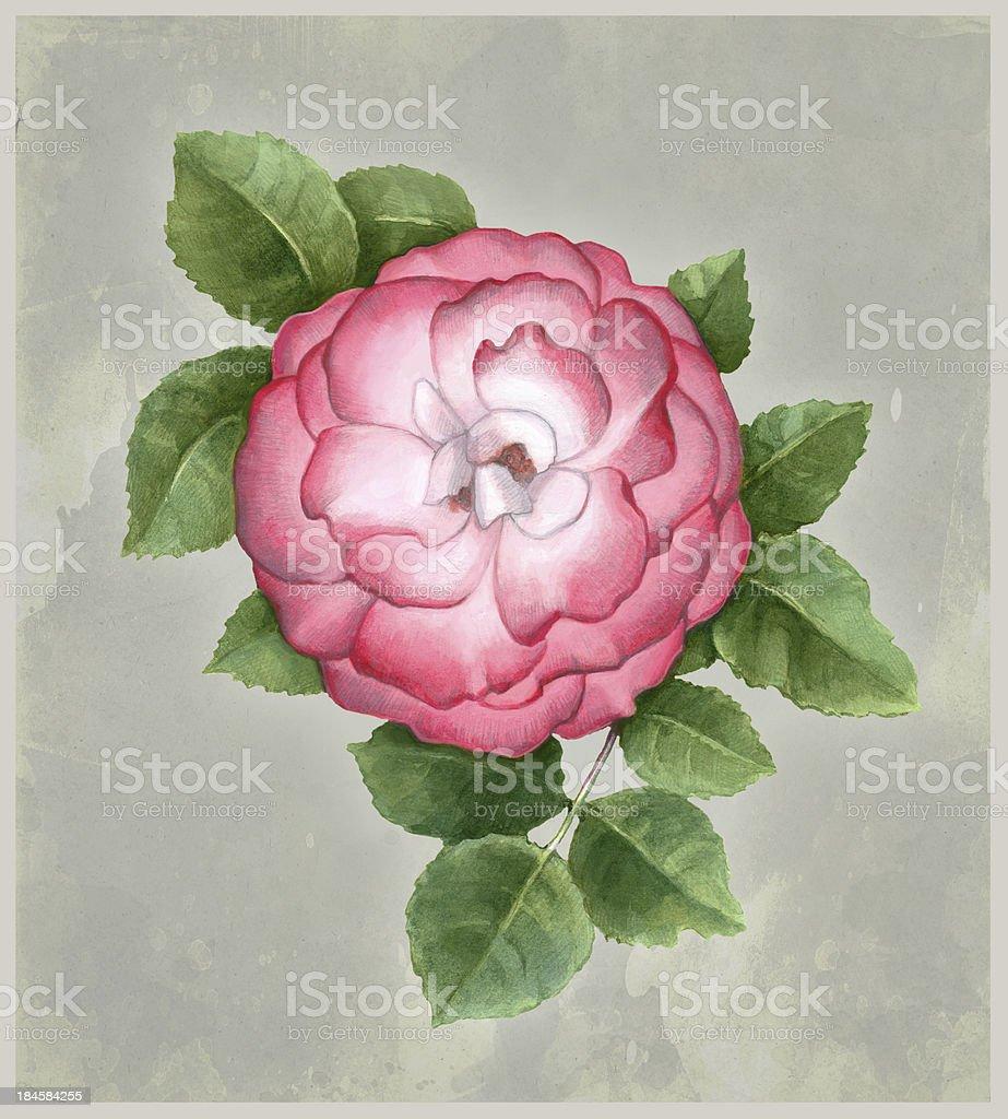 Watercolor illustration of dog-rose flower royalty-free stock vector art