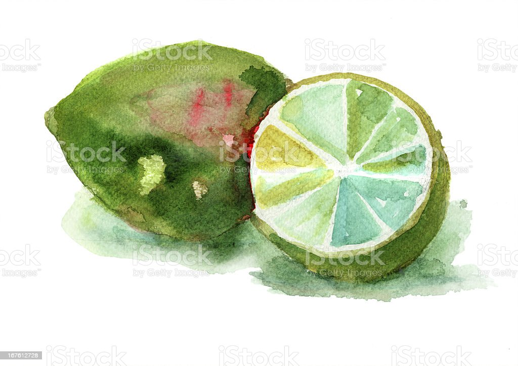 Watercolor illustration of Limes royalty-free stock vector art