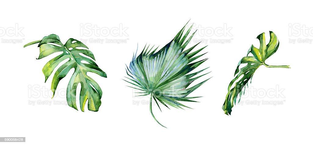 Watercolor illustration set of tropical leaves, dense jungle. vector art illustration