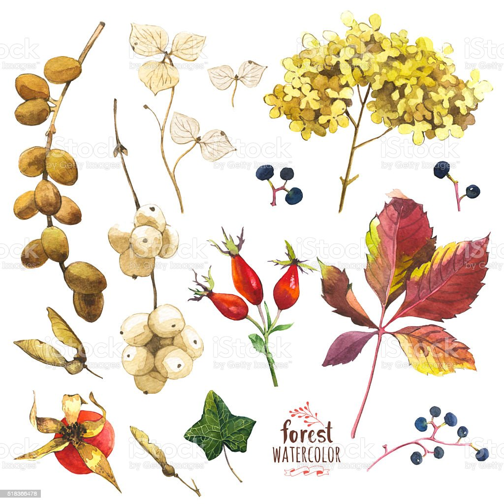 Watercolor illustration with branches, leaves and berries. stock photo