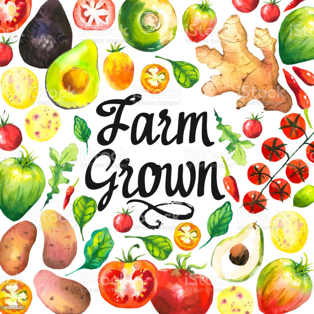 Watercolor illustration with round composition of farm vegetables. Set of different vegetables: tomato, potato, avocado, ginger, pepper, turnips, arugula, spinach. Fresh organic food vector art illustration