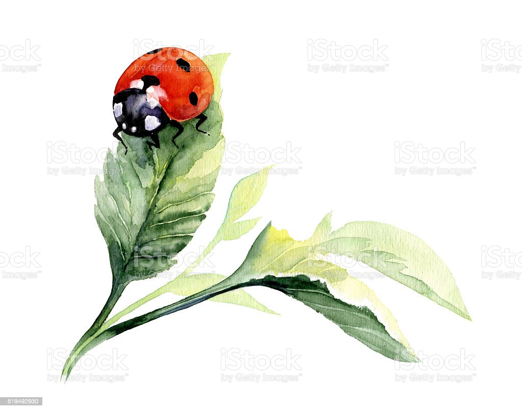 Watercolor isolated hand drawn ladybug on leaf. stock photo