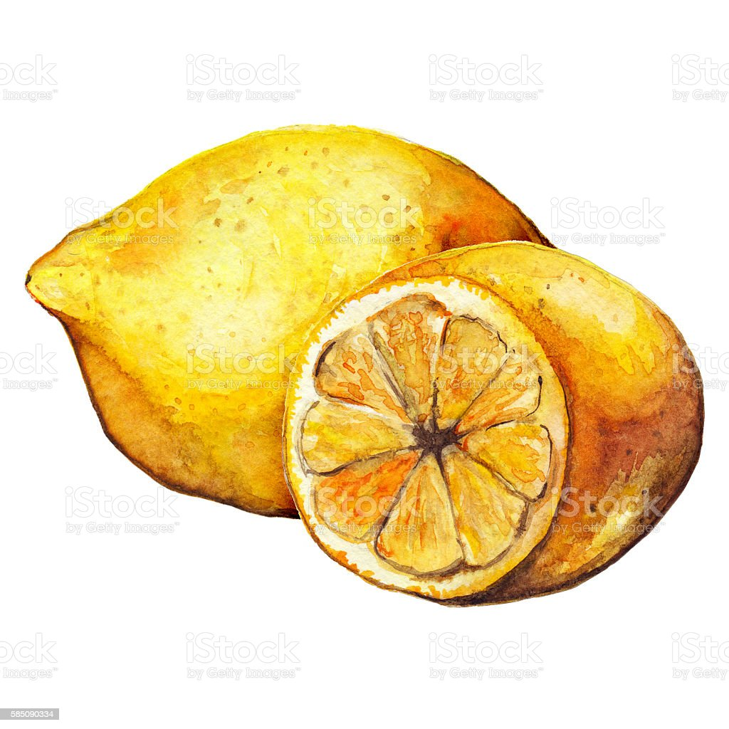 Watercolor lemon citrus yellow fruit still life isolated vector art illustration