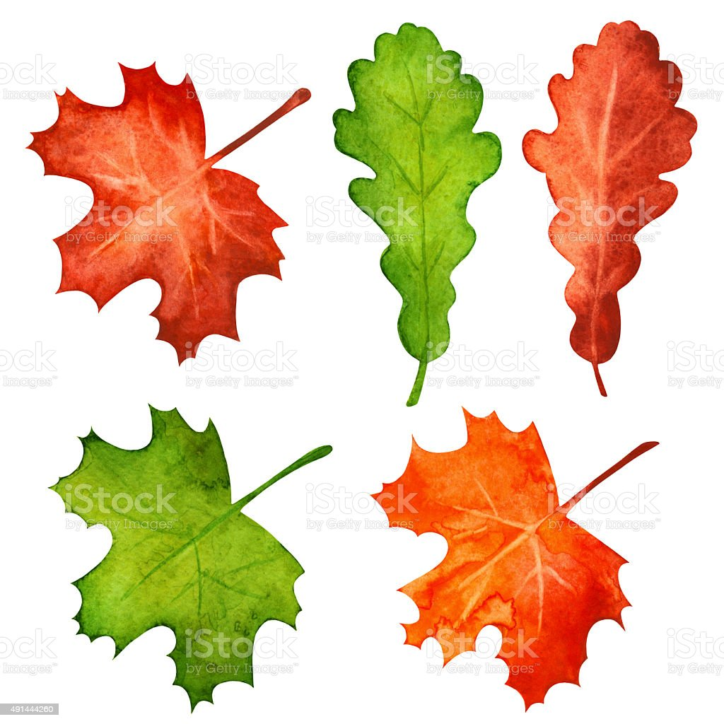Watercolor maple and oak leaves vector art illustration