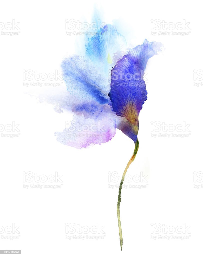 Watercolor painting blue iris vector art illustration