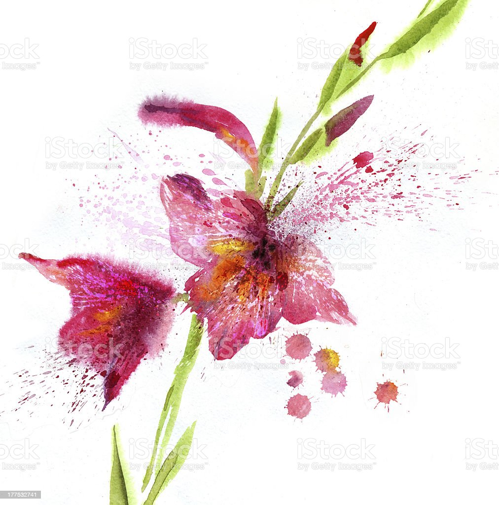Watercolor painting lily royalty-free stock vector art