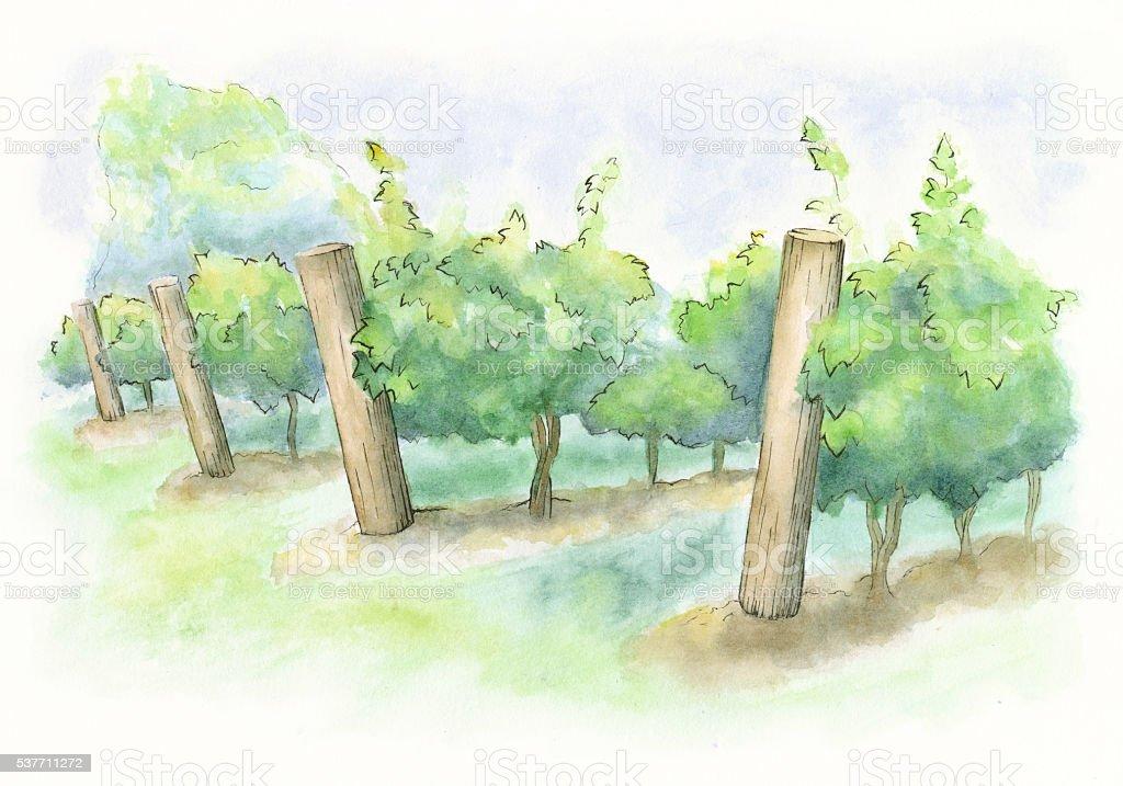 Watercolor Painting of a Vineyard - Raster Illustration vector art illustration