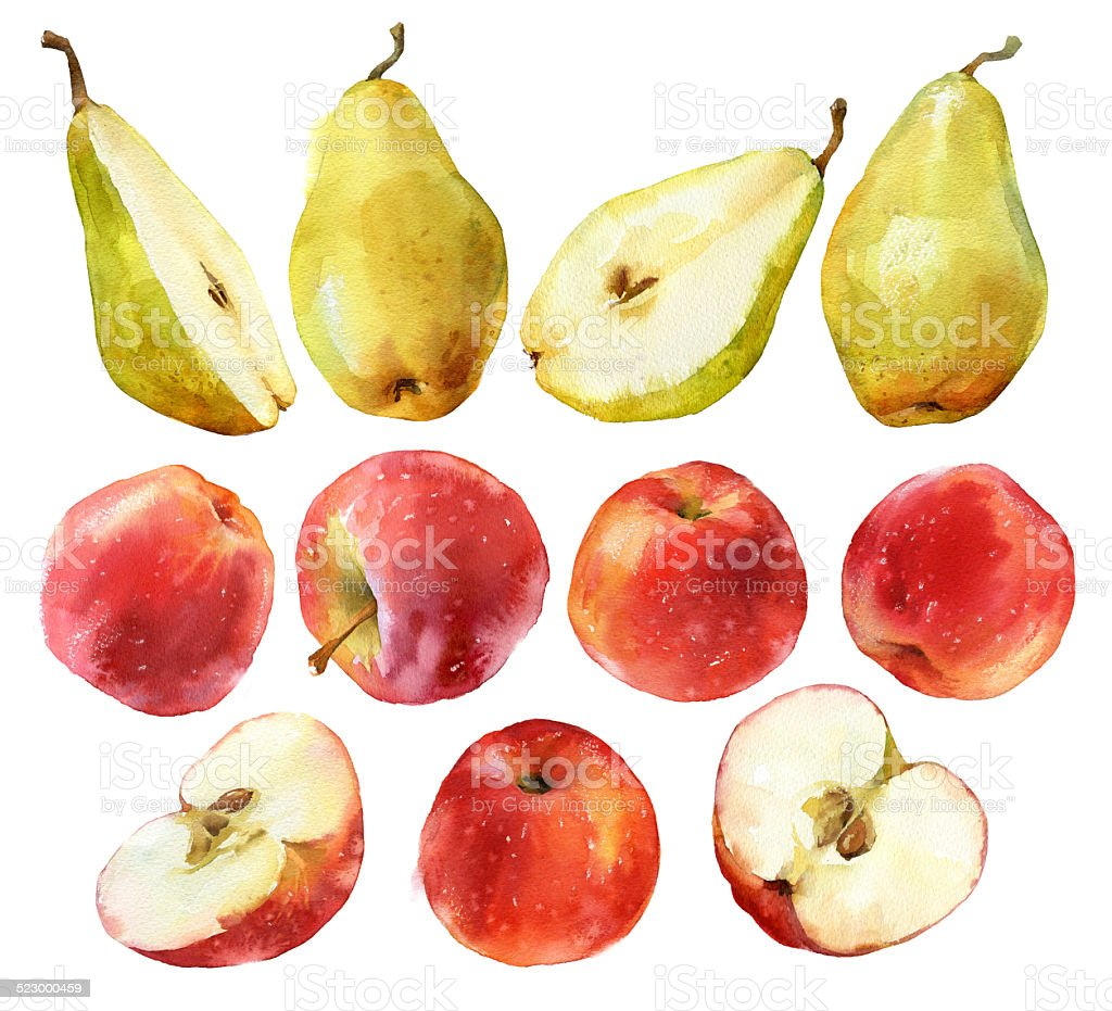 Watercolor painting of apples and pears vector art illustration