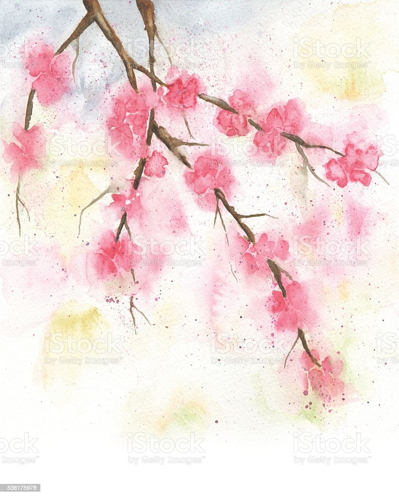 Watercolor Painting of Cherry Blossoms, Spring Illustration vector art illustration