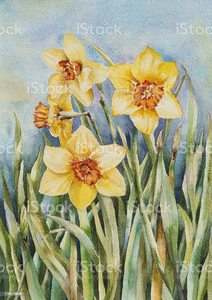 Watercolor Painting of Daffodils royalty-free stock vector art