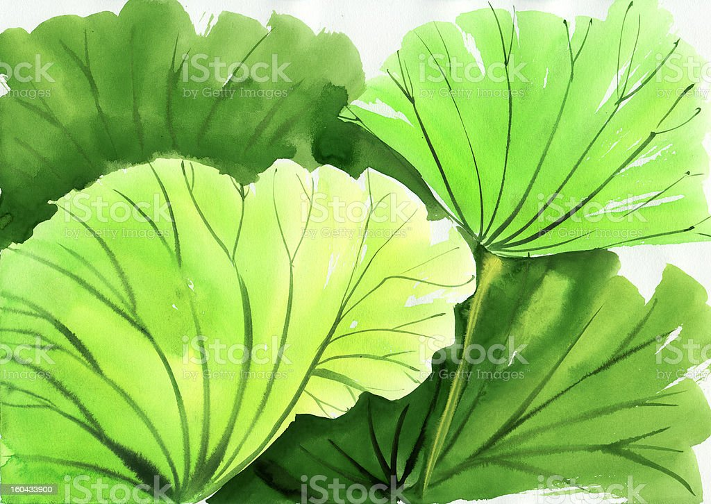 Watercolor painting of green lotus leaves vector art illustration