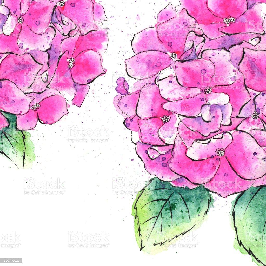 Watercolor Painting of Hydrangea Flowers, Spring Illustration vector art illustration