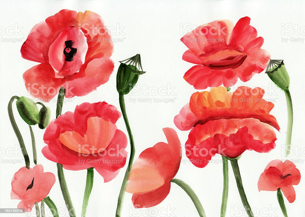 Watercolor painting of red poppies royalty-free stock vector art