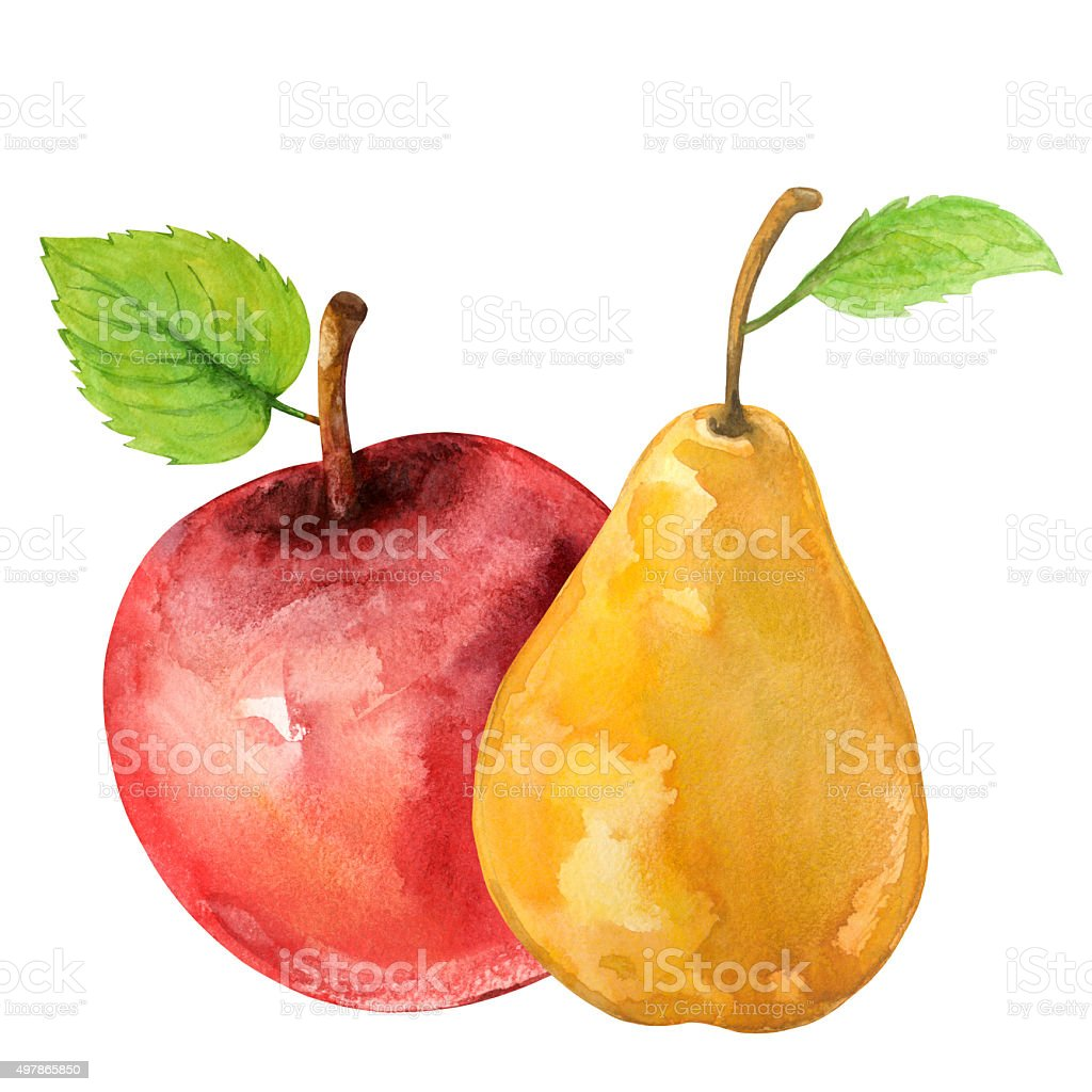 Watercolor pear, red apple with leafs vector art illustration
