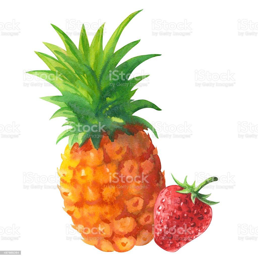 Watercolor pineapple, strawberry vector art illustration