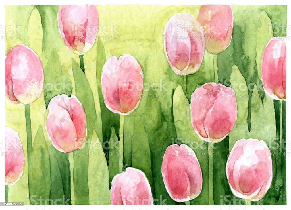 Watercolor pink tulips vector art illustration