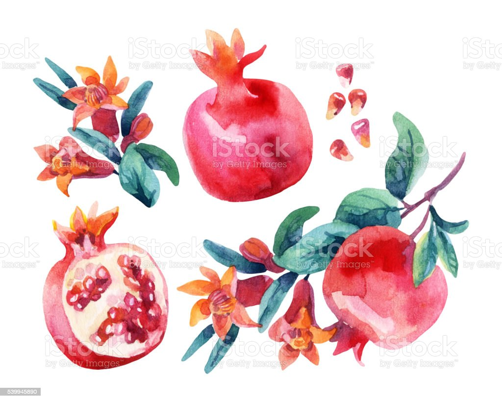 Watercolor pomegranate bloom branches and fruit set vector art illustration